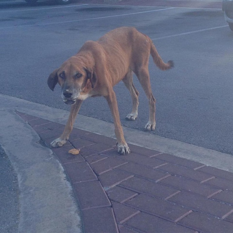 The Starving Dogs That Give Curaçao A Bad Name