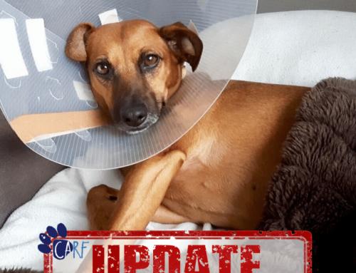 Update CARFIE Bram: Operatie Geslaagd, Nu Hard Werken Aan Revalidatie