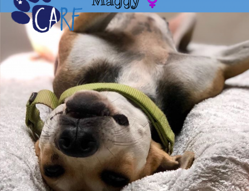 CARFIE Of The Week: Maggy