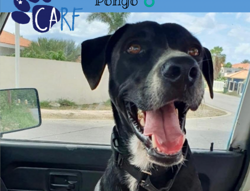 CARFIE Of The Week: Pongo
