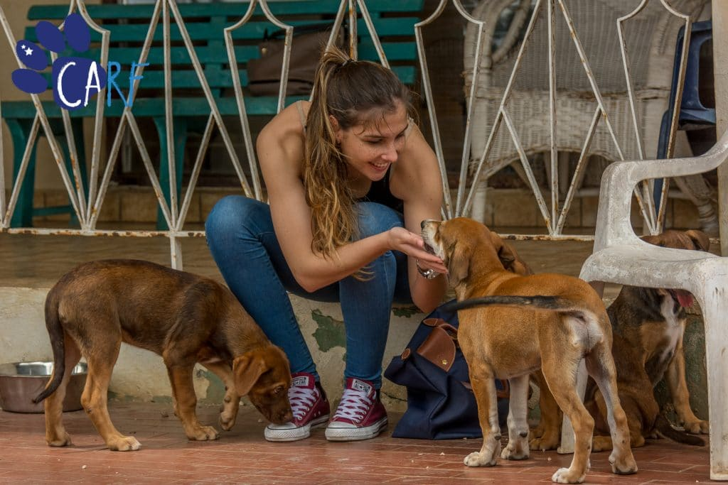 CARF Volunteers help to socialize our dogs