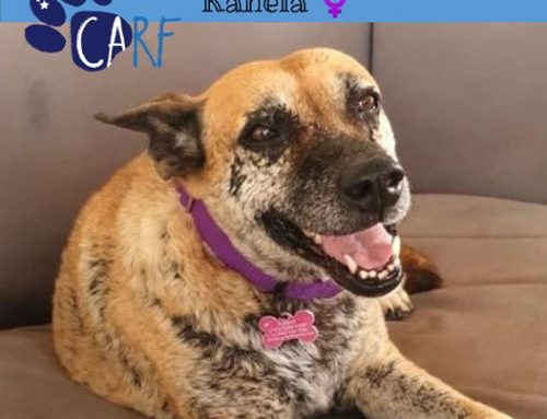 Kanela is about 5 years old and has been in our care for 1.5 years. We're not sure wh…