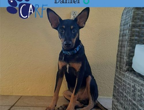Meet Daniel! He would like an adopter to go on some adventures with – followed by sofa-tim…