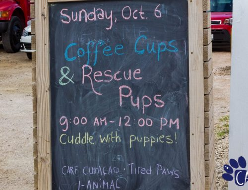 Puppies and coffee. Combine those two and you got yourself a caffeinated puppy-lovin' heav…