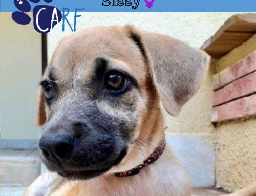 Sissy is as cute as they come. She was born in October and is ready to move to her forever…