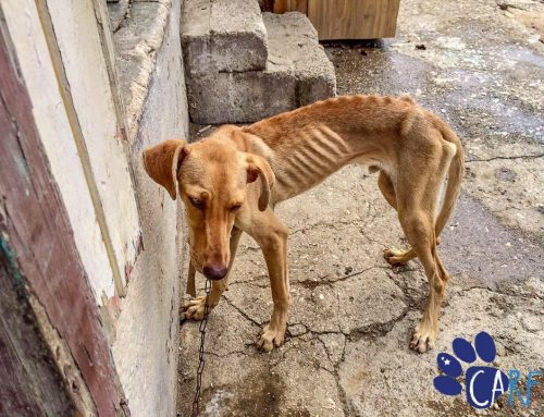 """Blown Away By The Severity Of Animal Abuse on Curaçao"""