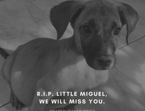 Rest In Peace, Little Miguel…