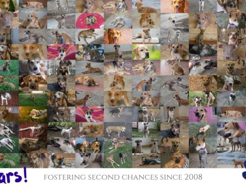 CARF CURAÇAO: 11 YEARS OF RESCUING & REHOMING DOGS
