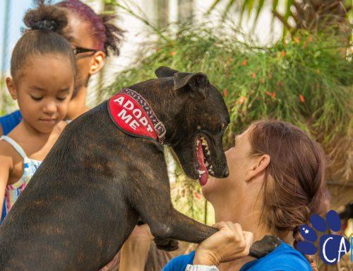 CARF viert Werelddierendagmiddels adoptie-evenement