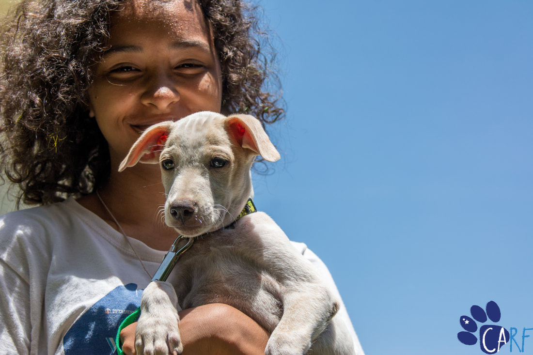 Why adopting a rescued dog is awesome