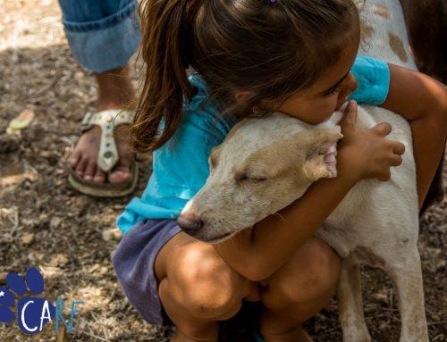 [NL] CARF organiseert eerste adoptie-evenement van 2017