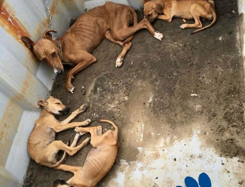 Momma Dog and Puppies Dumped at Landfill