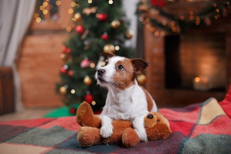Become a Dog's Secret Santa | CARF's Virtual Adoption Program