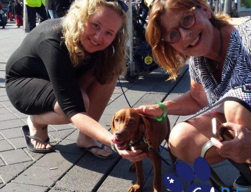 Adopteer Een Straathond Uit Curaçao
