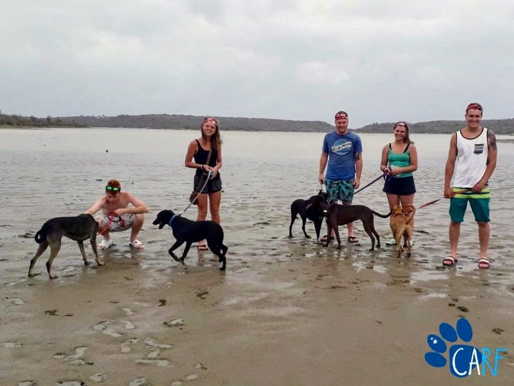 CARF Volunteers taking some of our dogs on a CARF Walk.